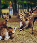 Amazing Electronic Deer Repellents That Work!