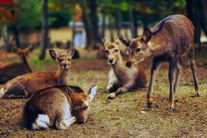 Amazing Electronic Deer Repellents That Work!