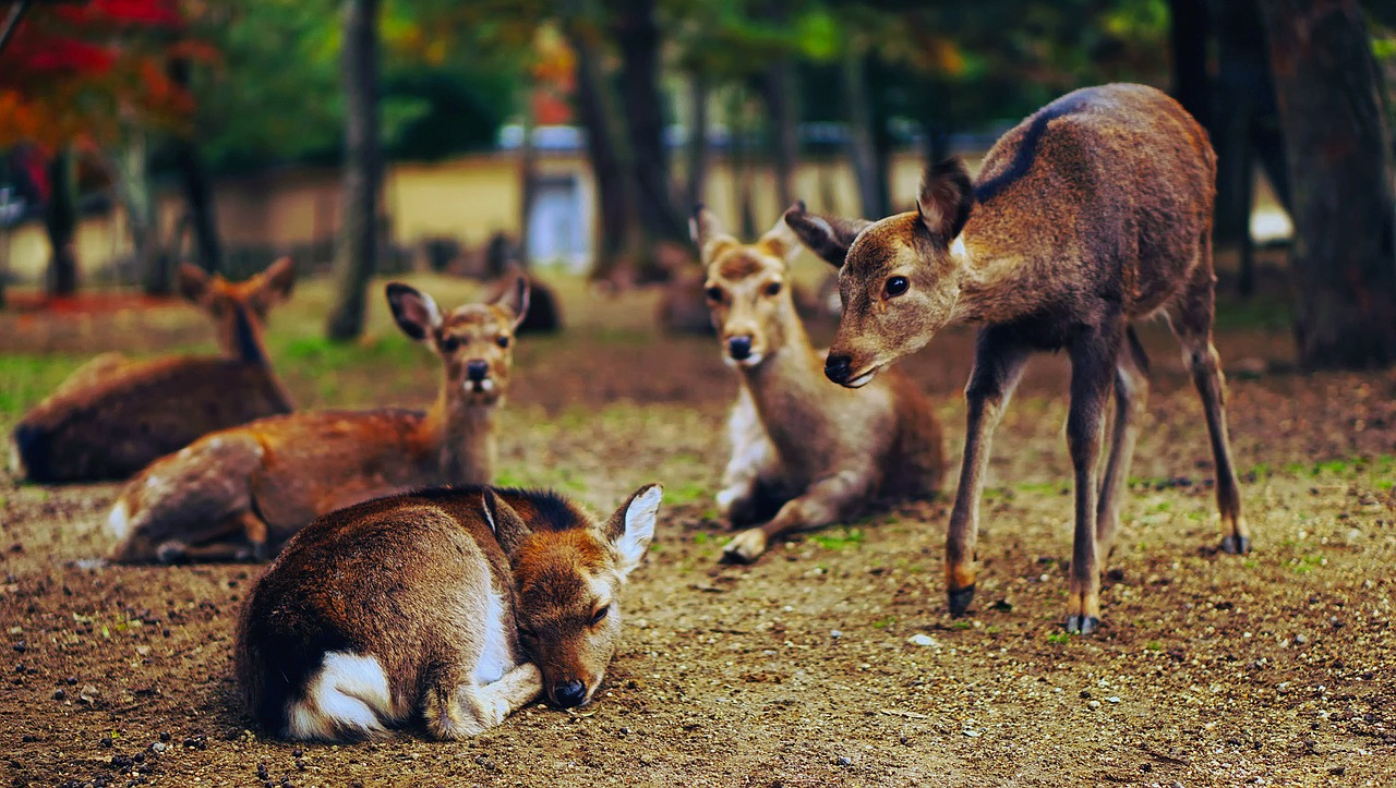 Electronic Deer Repellents That Work The Best Repellent Devices Dealing With