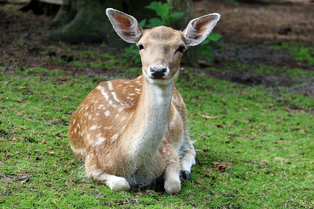 10 All Natural Deer Repellents That Work Forget About