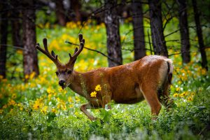 The Top 5 All Natural Deer Repellent Spray Products!