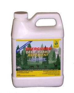 Everguard Deer Repellent Concentrate Review This One's a Keeper