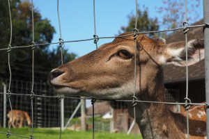 The Best Deer Fences for Gardens and Yards! (2)