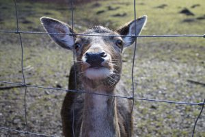 The Best Deer Fences for Gardens and Yards!