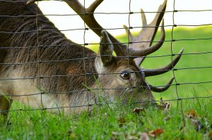 The Best Deer Netting for Gardens Stop Deer from Eating Plants
