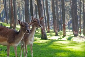 How to Get Rid of Deer in Your Yard Keep Deer Off Your Property for Good