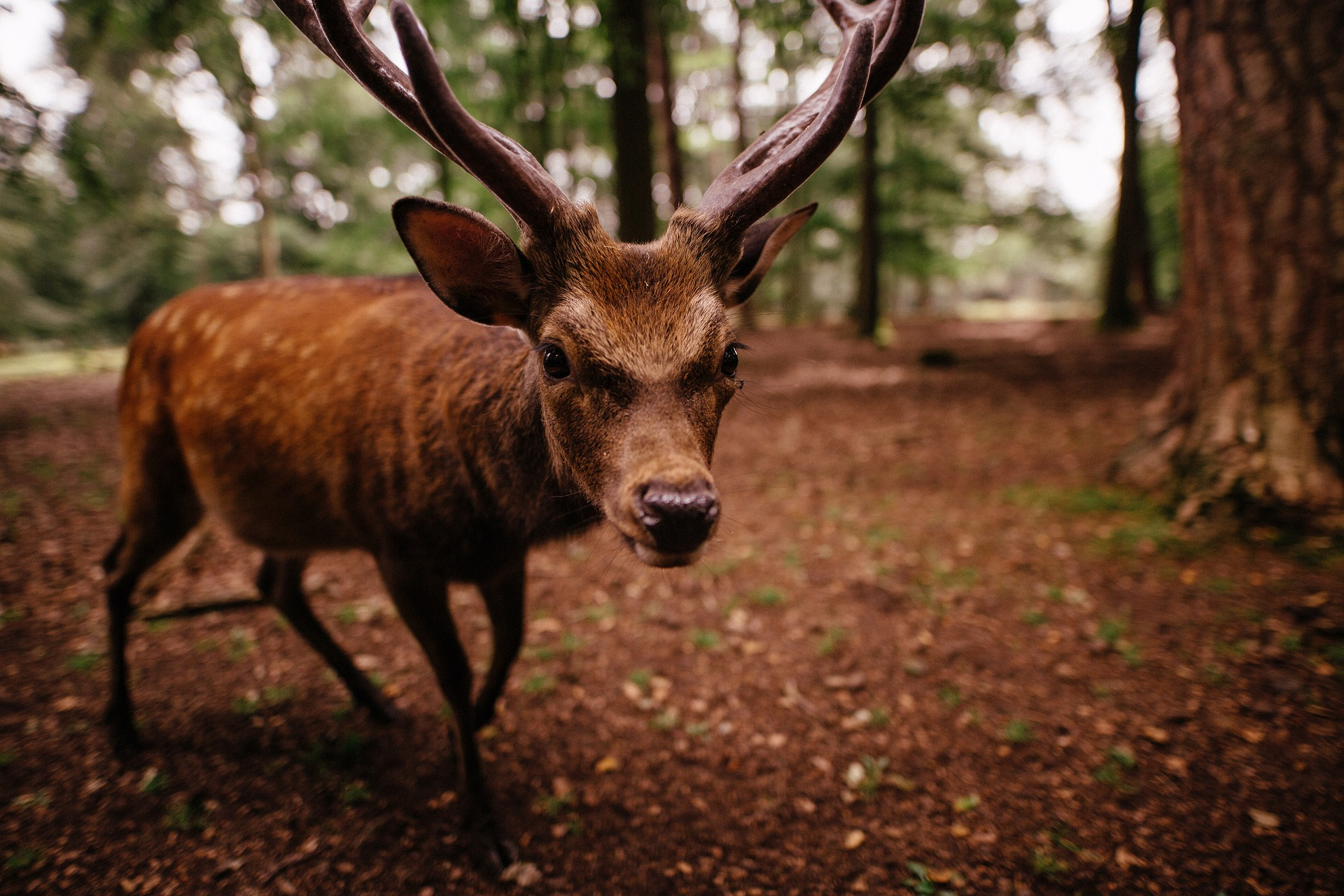 How to Keep Deer Away From the Garden 6 Tips to Have One of the