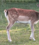 How to Keep Deer Out of the Garden Prevent Deer From Eating Your Plants (2)