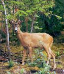 How to Protect Plants From Deer Stop Deer From Eating Flowers
