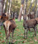 How to Protect Trees From Deer 6 Deer Deterrent Products That Work