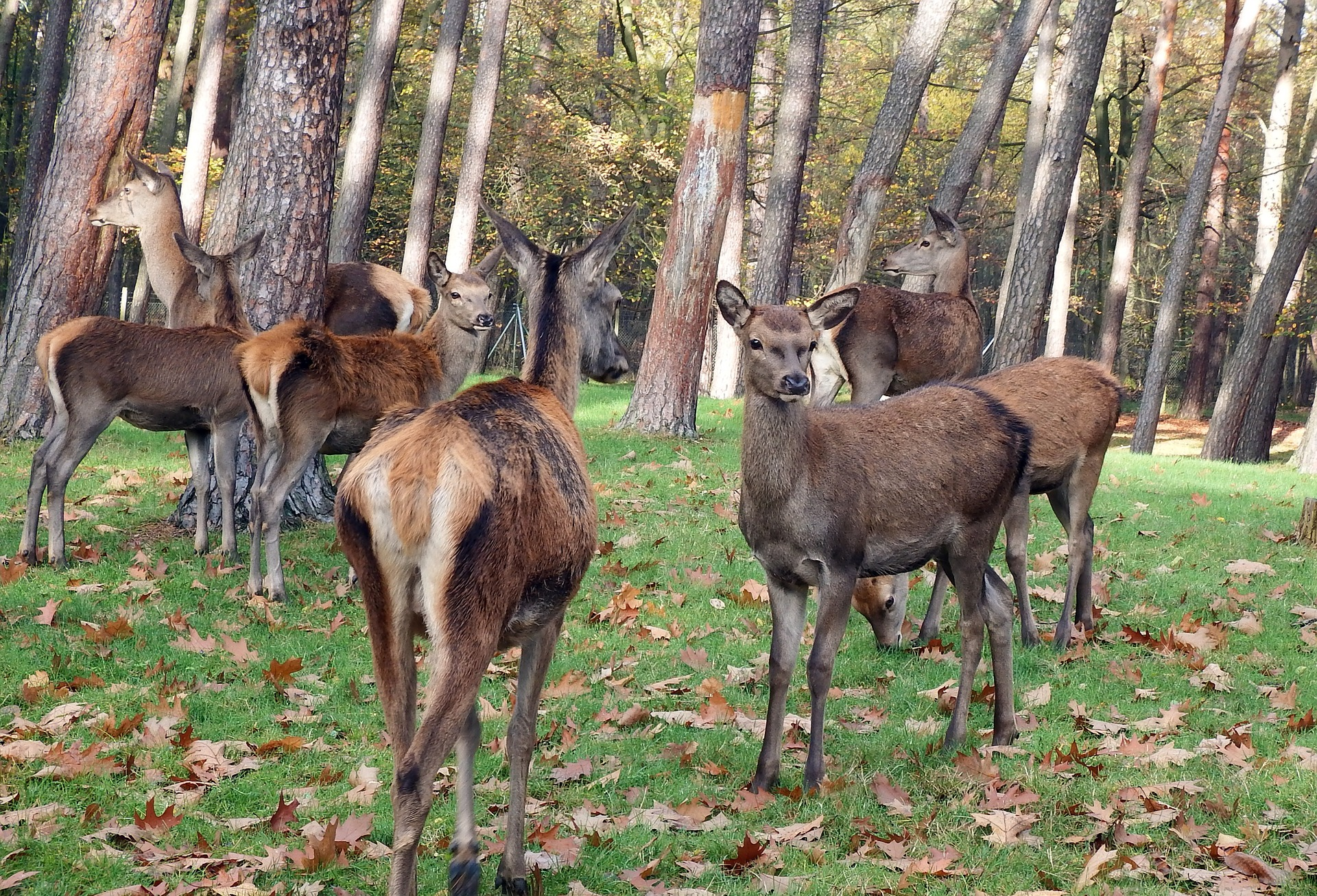 How To Protect Trees From Deer 6 Deter Products That Work Dealing With