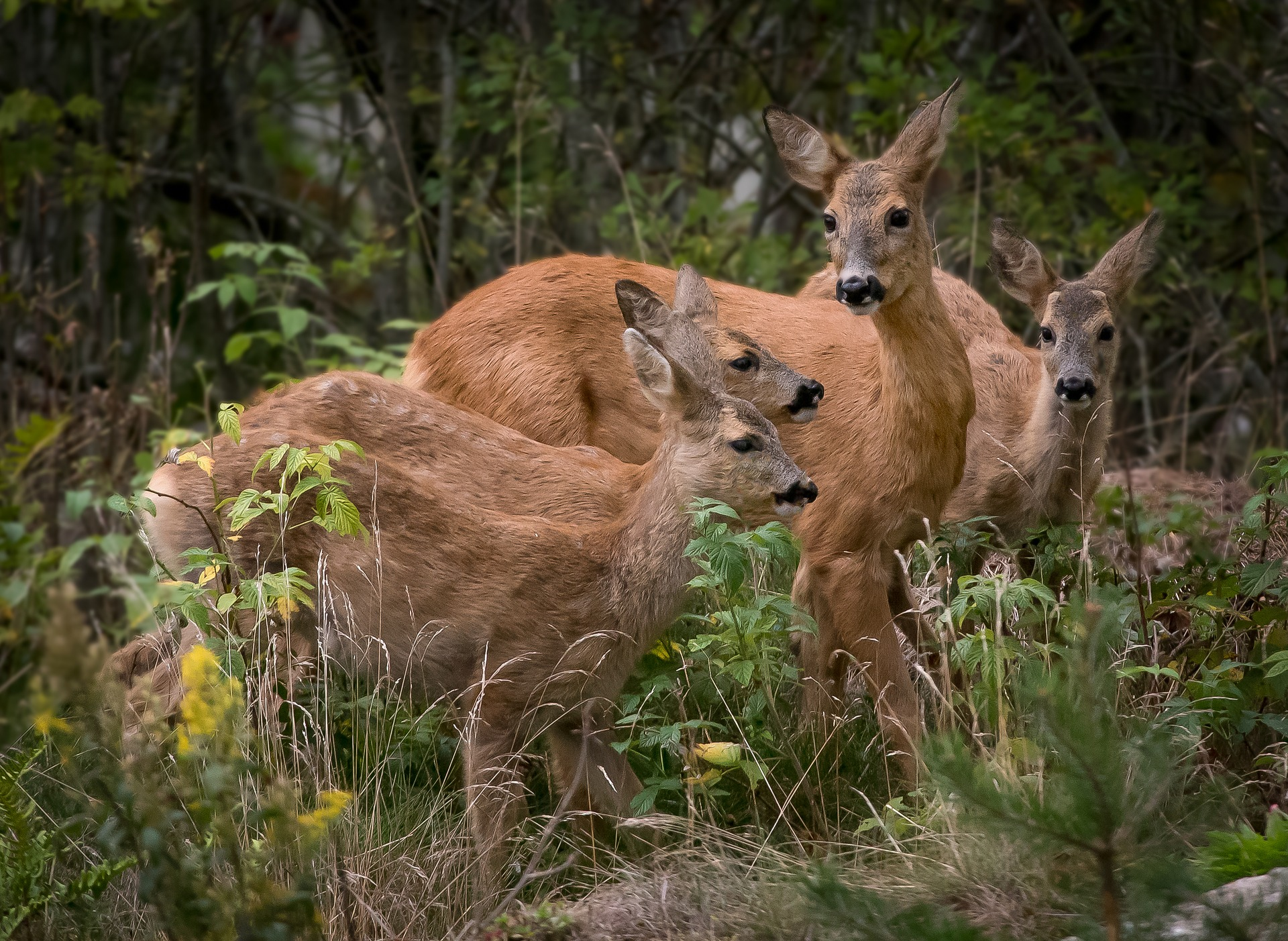 How To Stop Deer From Eating Plants: The Best Way To Keep Deer Out Of The  Garden! | Dealing With Deer