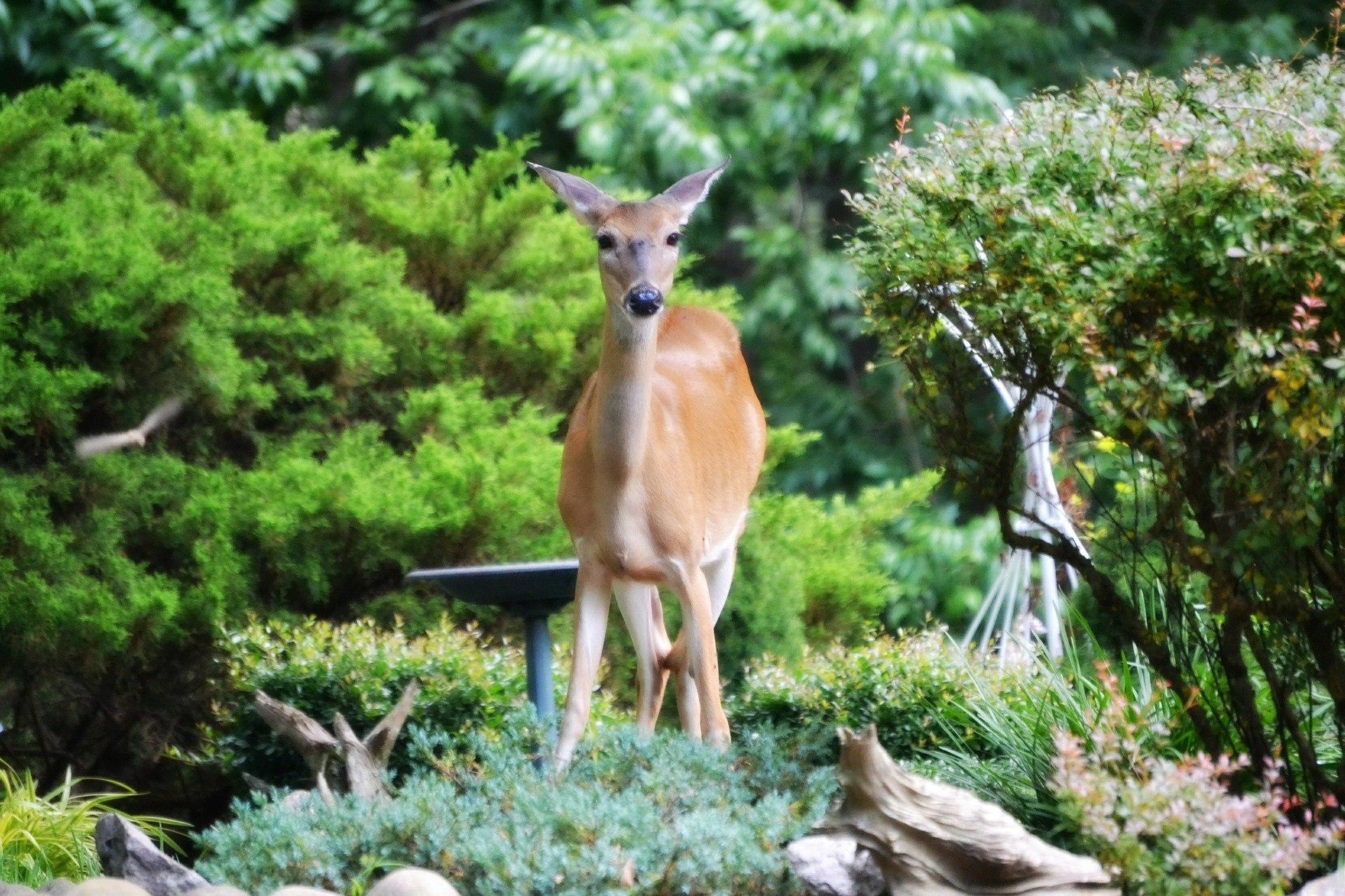 The Best Deer Repellent Reviews Keep Deer Out of the Vegetable