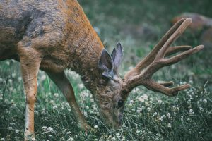 The Best Deer Resistant Plants Here Are Some Plants That Deer Dont Like (2)