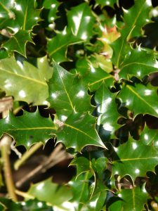 The Best Deer Resistant Plants Here Are Some That Dont Like