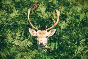 Deer Repellent Plants