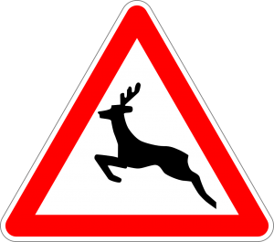 The Best Deer Whistles for Cars: Helping You Avoid Deer While Driving!